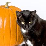 Farleythe Cat